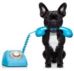 Hondje met telefoon in bek